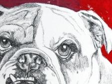 BulldogMops50